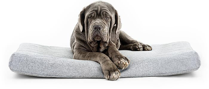 popup_dog