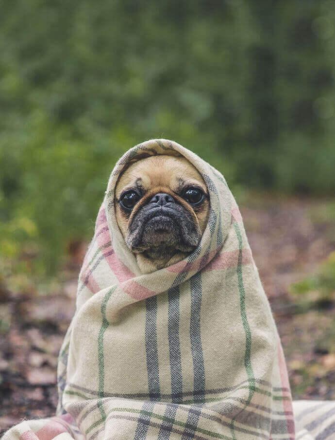Elegir colchón para mascotas
