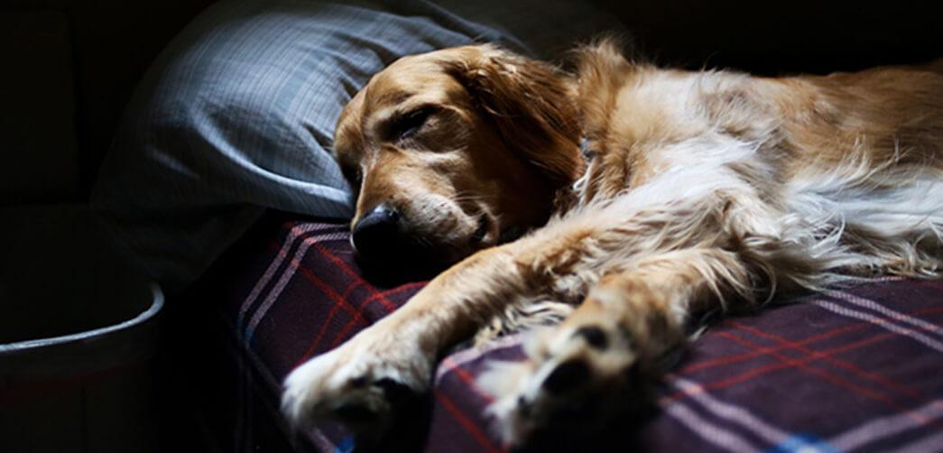 ¿Quién no ha querido nunca dormir con su mascota?