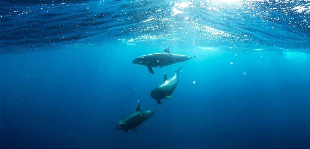 Cómo duermen los delfines