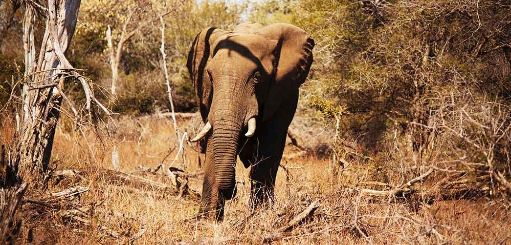 Cómo duermen los elefantes
