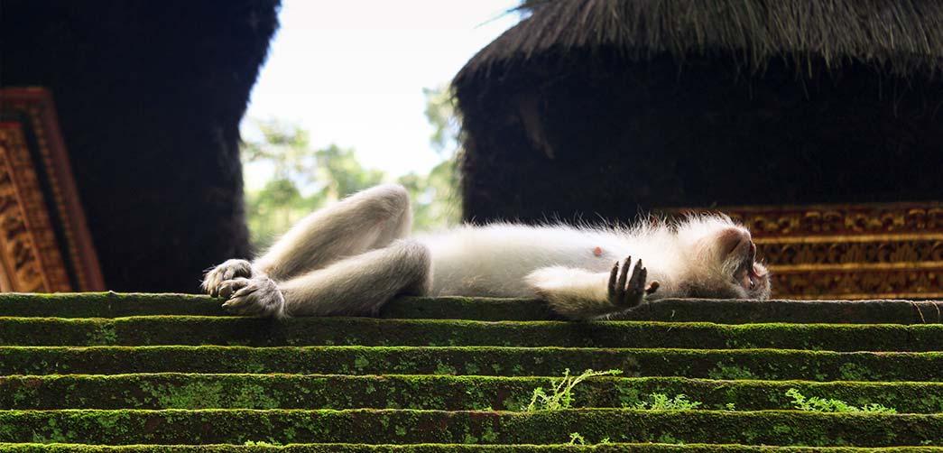 ¿Cómo duermen los monos?