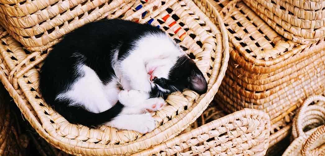 Por qué duermen tanto los gatos
